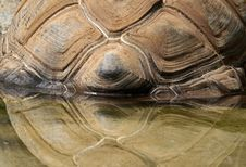 Free Tortoise Shell Stock Photos - 33828993