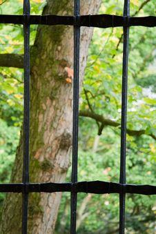 Tree Behind Poles Stock Photo