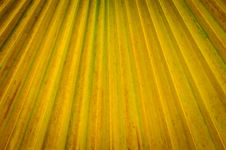 Free A Close Up Of Tropical Palm Tree Texture Stock Photography - 33843542