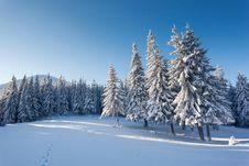 Free Winter Stock Image - 33854181
