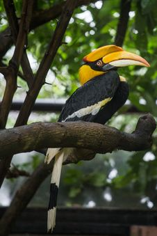 Free Hornbill Royalty Free Stock Photography - 33858807