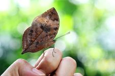 Free Beautiful Butterfly Royalty Free Stock Photos - 33858888