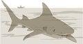 Free Shark Royalty Free Stock Image - 33868336