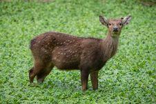 Free Deer Royalty Free Stock Images - 33860209