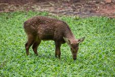 Free Deer Royalty Free Stock Images - 33860299