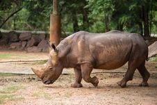 Free White Rhino Stock Photos - 33862283