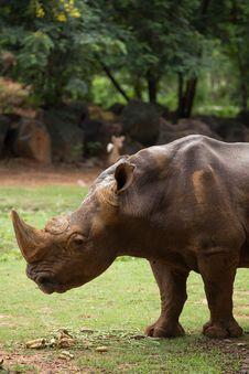 Free White Rhino Stock Photo - 33862480