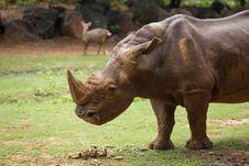 Free White Rhino Stock Photo - 33862530