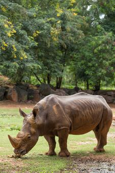 Free White Rhino Stock Image - 33862591