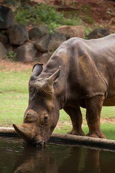 Free White Rhino Stock Image - 33862651