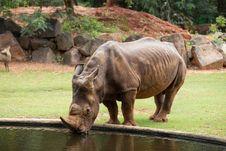Free White Rhino Royalty Free Stock Photos - 33862738