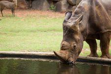Free White Rhino Royalty Free Stock Photography - 33862837