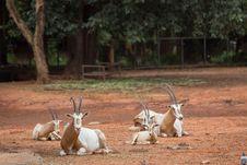 Free Deer Stock Photos - 33863083