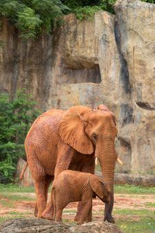Free Elephant Royalty Free Stock Images - 33863279