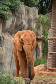 Free Elephant Stock Photo - 33863380