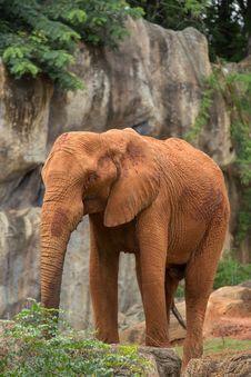 Free Elephant Royalty Free Stock Image - 33863476