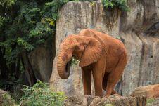 Free Elephant Royalty Free Stock Image - 33863556