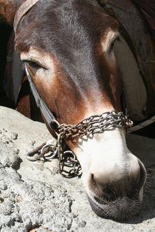 Free Donkey Head Stock Photography - 33866032