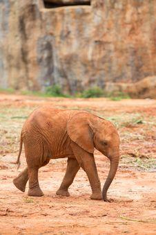 Free Baby Elephant Royalty Free Stock Photo - 33873345