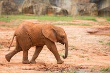 Free Baby Elephant Stock Image - 33873531