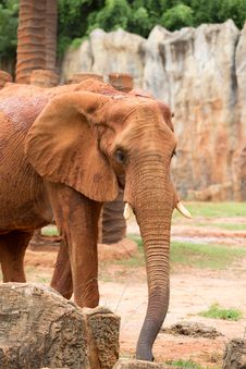 Free Elephant Stock Photos - 33873753