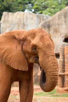 Free Elephant Stock Photo - 33873920