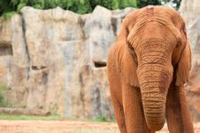 Free Elephant Stock Photo - 33874020