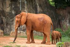 Free Elephant And Baby Royalty Free Stock Photography - 33874157