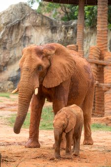 Free Elephant And Baby Stock Photography - 33874452
