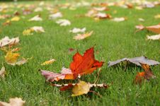 Free Tree Leaves In Autumn Royalty Free Stock Photos - 33884348