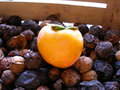 Free Death Nature-Persimmon & Nuts Stock Photos - 3391663