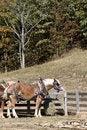 Free Horse Near Fence Royalty Free Stock Image - 3391826