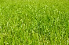 Free Well-groomed Lawn Stock Images - 3390294