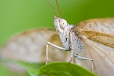 Free White Butterfly Stock Photos - 3390323