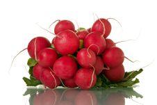 Free Radish Stock Images - 3391534