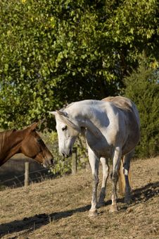 Free Horse Kiss Stock Photo - 3391880