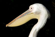 Free Pelican Eye Royalty Free Stock Photo - 3393565