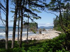 Free Ruby Beach Royalty Free Stock Image - 3394596