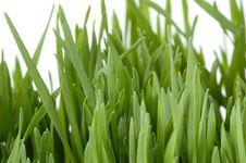Free Young Green Grass Stock Photos - 3394643