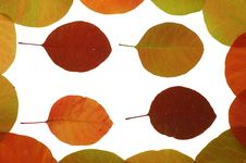 Free Coloured Leaves Frame Stock Images - 3396124