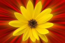 Free Yellow Flower Stock Image - 3396251