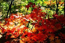 Free Guanmenshan Mountains 04 Stock Photo - 3396600