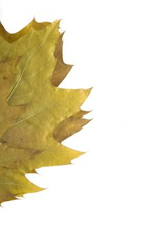 Free Autumn Leaf Stock Photography - 3397762