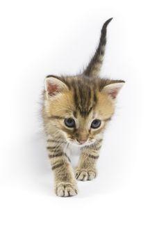 Free Little Kitten Stock Images - 3398344