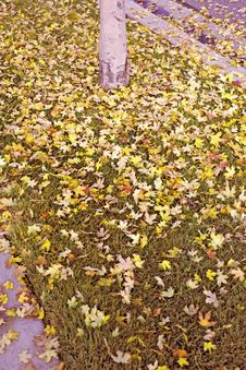 Free Fallen Leaves Royalty Free Stock Photography - 3398567