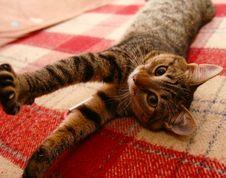 Free Cat Stock Photo - 3399720