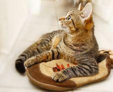 Free Cat Stock Photos - 3399893