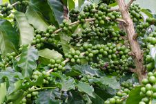 Free Coffee Beans Royalty Free Stock Image - 33906456