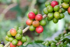 Free Coffee Beans Stock Image - 33906481