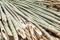 Free Bamboo Royalty Free Stock Photo - 33914915